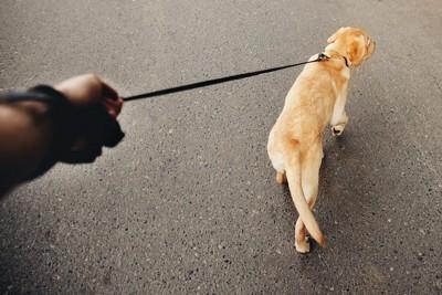 リードを引く飼い主の手と犬の後ろ姿