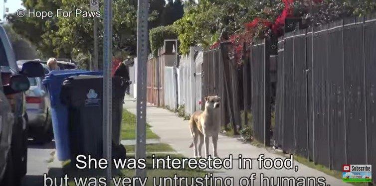 たたずむ犬