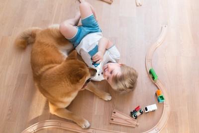 車のおもちゃで遊ぶ子どもと犬