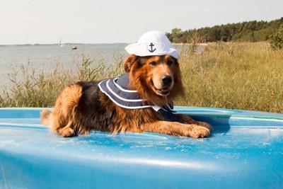 セーラー服の犬
