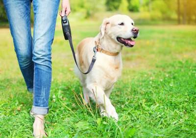 飼い主のそばに付いて散歩する犬