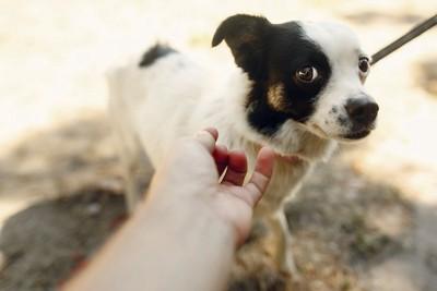 差し出された人の手に警戒する様子の犬