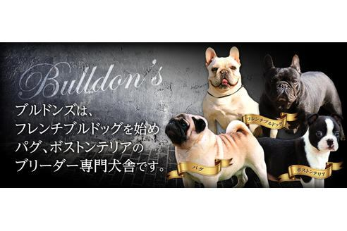 BULLDON'Sのイメージ画像