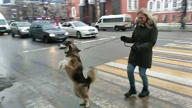 立って歩く犬