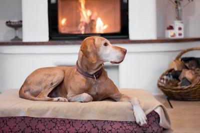 暖炉の前に置かれたベッドで休む犬