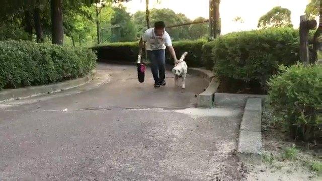 向かってくる犬と人