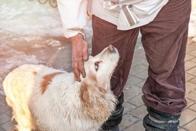 男性に撫でられて見上げる犬