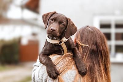 女性に抱っこされている子犬