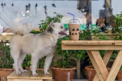 テーブルの上に置かれたドリンクを見つめる椅子の上に立つ犬