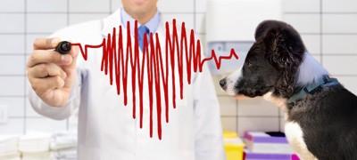 獣医師と犬と心拍のチャート