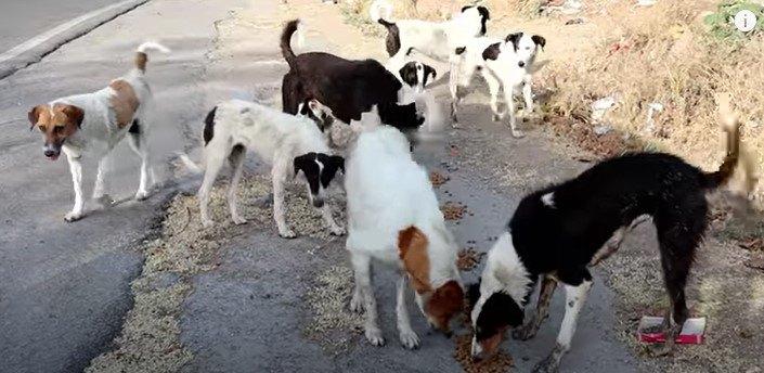 餌をたべる犬達