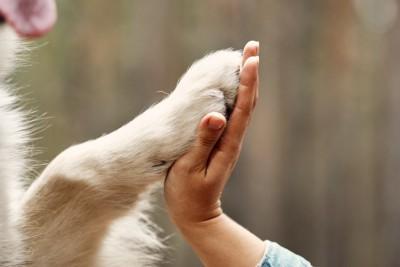 人の手とタッチする犬の手