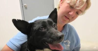 犬と愛護団体スタッフ