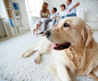 ソファーに座る家族とカーペットの上でくつろぐ犬