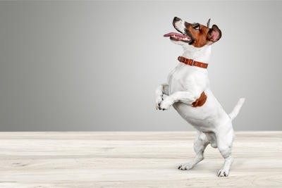 口を開きながら立ち上がる犬