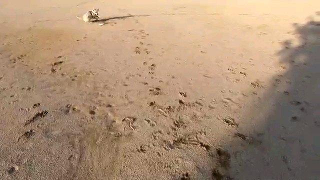 地面のフリスビーを見る犬