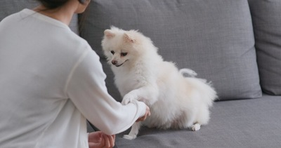 飼い主の腕にタッチしてオヤツを催促する犬
