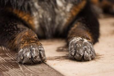 泥だらけの犬の足