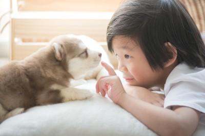 子犬と少年