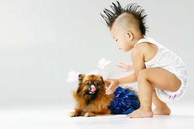 犬を触る少年