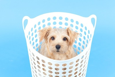 白い洗濯カゴの中に入っている犬