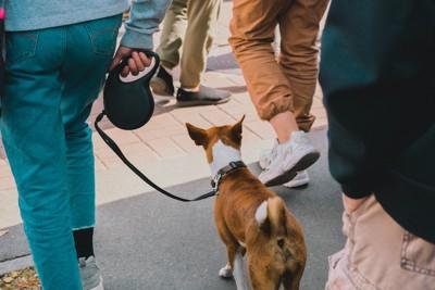 人混みを散歩する犬の後ろ姿