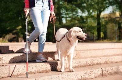 階段を歩く盲導犬