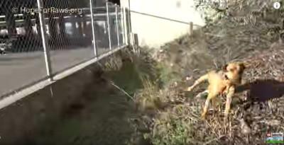 飛び出す犬