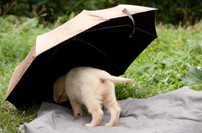 傘に潜り込む犬