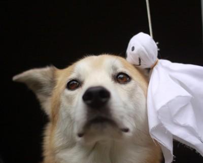テルテル坊主と犬