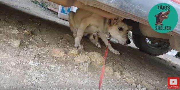 車の下に隠れる犬