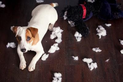 部屋中にティッシュを散らかしている犬