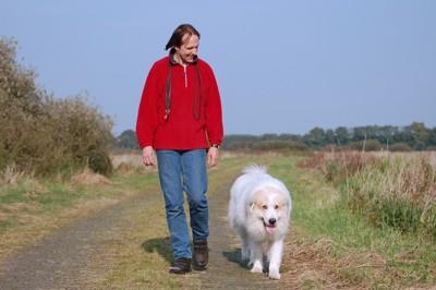 男性と歩いているグレートピレニーズ