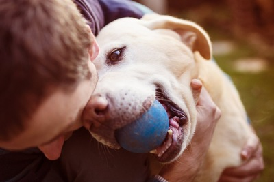 ボールをくわえて男性を見る犬