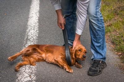 皮のベルトで犬を拘束しようとしている男性
