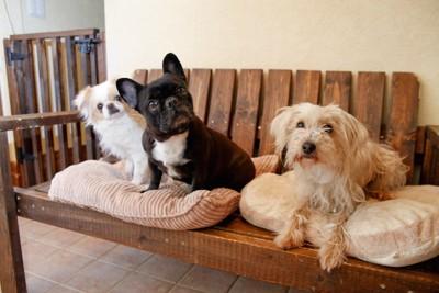 ベンチでくつろぐ三匹の犬