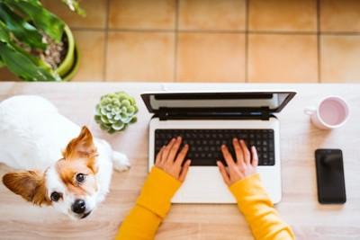 テーブルの上に登る犬とパソコン