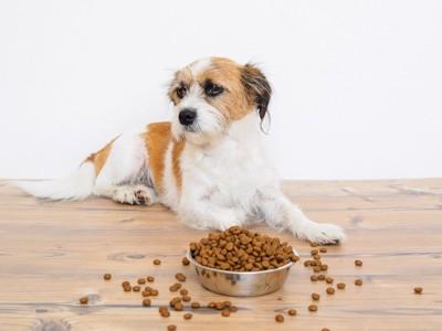 お皿から溢れたドッグフードと犬