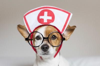 看護師な犬