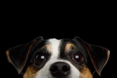 上目遣いの犬のアップ