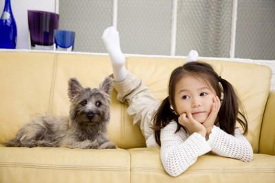 ソファに乗る犬と子供