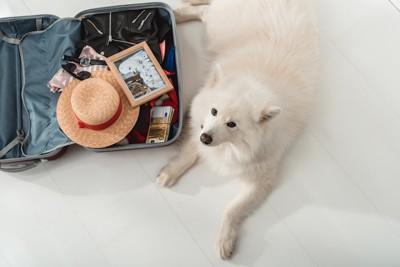 開いて置かれたトランクと白い犬