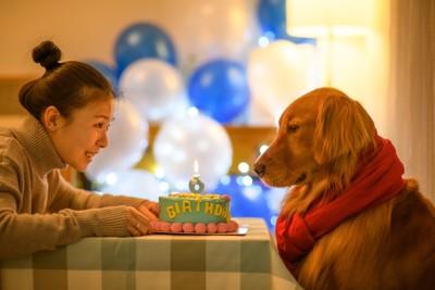ゴールデンとケーキと女性