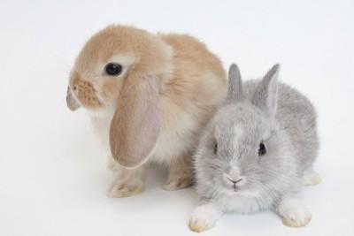 寄り添う2匹のウサギ