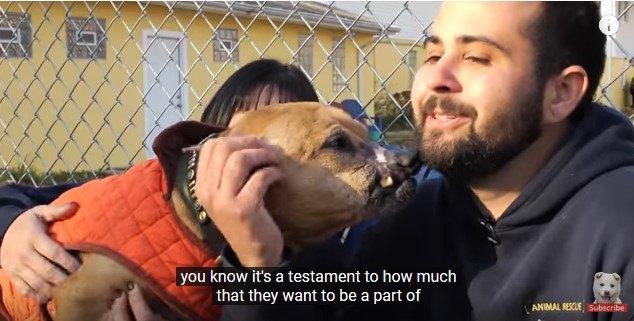 人に甘える犬2