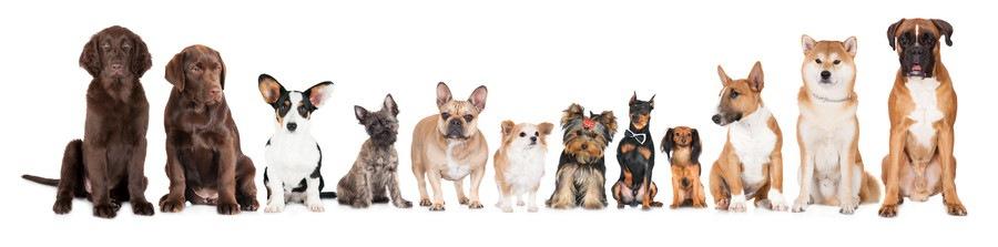 並んだ犬たち