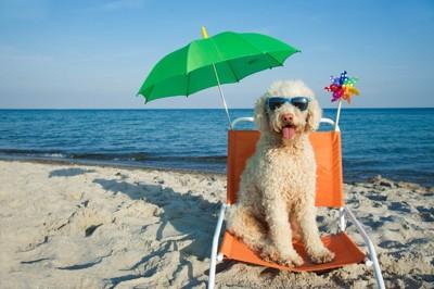暑さ対策が万全な犬
