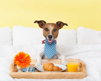 ベッドの上で人間の食事を摂ろうとしている犬