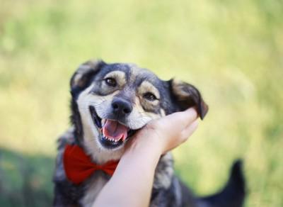 嬉しそうな犬と人の手