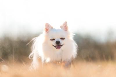 目を瞑って笑う犬